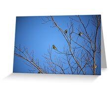Yellow Birdies  Greeting Card