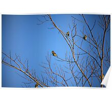 Yellow Birdies  Poster