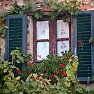 Geranium Window And Shutters by phil decocco