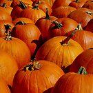 Pumpkins Galore by Karen Checca