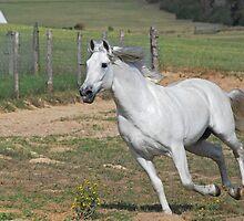 The Stallion by Cathy Jones