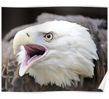 America's Bird Poster