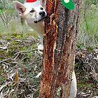 Bush Christmas by Meg Hart