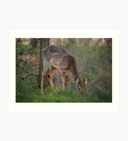 Wild Deer Eats Dinner Art Print