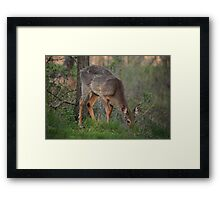Wild Deer Eats Dinner Framed Print