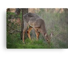 Wild Deer Eats Dinner Metal Print