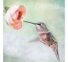 Hummingbird on Green Photographic Print