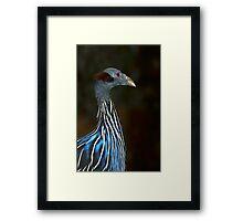 Vulturine Guinneafowl Framed Print