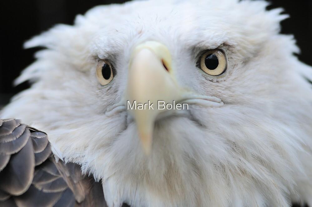 America's Bird II by Mark Bolen