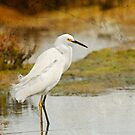 Snowy Egret, Textured by Susan Gary