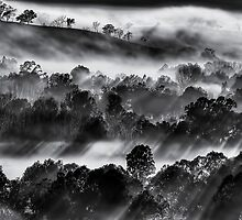 Winter morning mist, Ovens Valley by Kevin McGennan