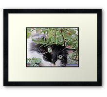 Happy Holidays, Happy Christmas ! Framed Print