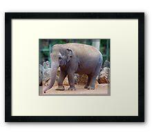 Tricia the Elephant Framed Print