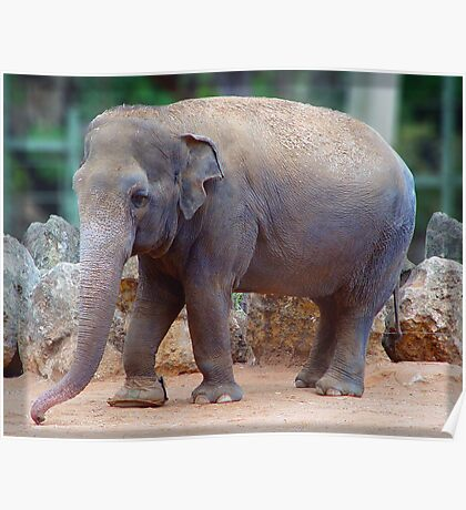 Tricia the Elephant Poster