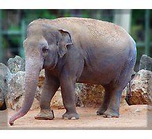 Tricia the Elephant Photographic Print