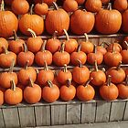 Pretty Pumpkins All In A Row by RobynLee