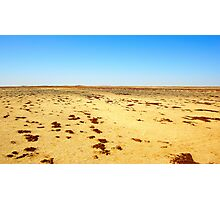 Lichens in the Namib Photographic Print