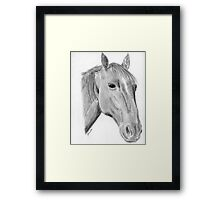 Horse drawing chestnut Thoroughbred Gunilla Wachtel Framed Print