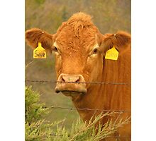 A Cow Named, Sioux Photographic Print