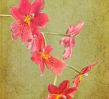 Verdant Orchid by Peter D