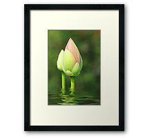 Budding Lotus Flower Framed Print