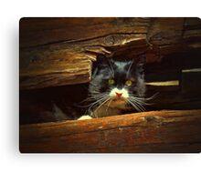 Cat Hiding Canvas Print