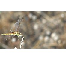 Bokeh Dragonfly Photographic Print