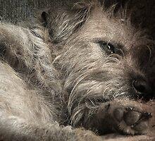 Daydreaming Doggie by Jane Underwood