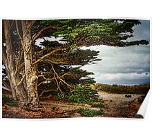 Trees By The Sea Poster