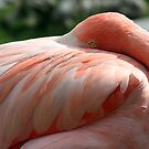 Shy Flamingo by Sheryl Unwin