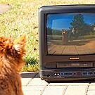Angel wants to be on TV someday by susan stone