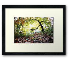 Autum Handstand in Central Park, New York  Framed Print