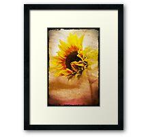 Grungy textured sunflower Framed Print