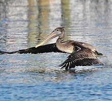 Flying Low by Kathy Baccari