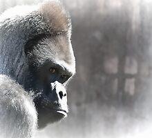 Ape Dream by Diego  Re
