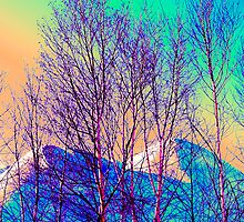 Mountain Birch Grove by morgan earl