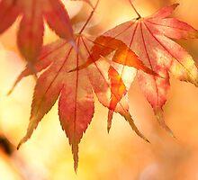 Autumn Glow by Anne Gilbert