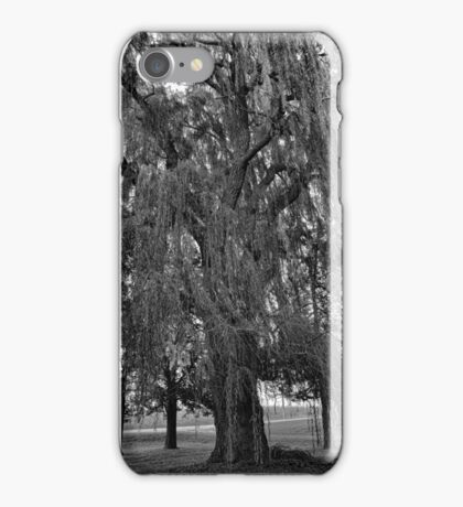 Old Man Willow Weeping  iPhone Case/Skin