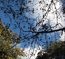 Autumn Sky and Canopy  by BlueMoonRose