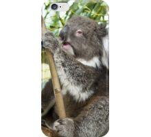 Australian Koala iPhone Case/Skin