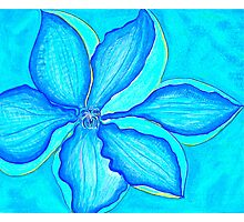 Blue Clematis Photographic Print