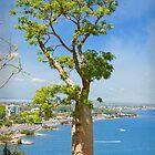 Baobab Tree by Darren Speedie