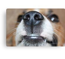 Wet Nose Canvas Print