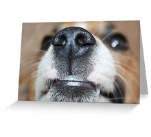 Wet Nose Greeting Card