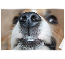 Wet Nose Poster