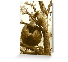 A Mouse House Gourd Greeting Card