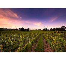 Vilagrad Winery Photographic Print