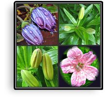 Early Summer Raindrops Floral Collage Canvas Print