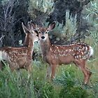 Twin Fawns by Arla M. Ruggles