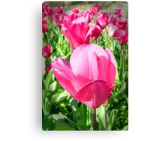 Perfect Pink Tulips Canvas Print